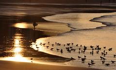 "Gijón (Pepix2007) Tags: sunset sea españa beach atardecer gold mar spain nikon surf surfer gijón gulls north asturias playa surfing explore sanlorenzo 1001nights mb gaviotas soe cubism ogm surfista marcantábrico opl photographia outstandingshots oceanshore goldenmix golddragon nortedeespaña outstandingshotshighlight vision1000 worldbest superaplus aplusphoto nikond90 magicalbeauty ""wonderfulworldmix"" proudshopper rubyphotographer gününeniyis natureandnothingelse obq lesamisdupetitprince ""mallmixstaraward"" naturescreations nikond90club novavitanewlife sensationalphoto flickrclassique minuevacámara thedantecircle themonalisasmile worldsartgallery coppercloudsilvernsun"