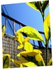 Cirque du Soleil. (Felipe Smides) Tags: chile flowers naturaleza sun house flores art sol nature fly casa arte circo natural flor natura felipe mosca cirquedusoleil acrobacia artisticexpression acróbata mywinners abigfave aplusphoto beatifulcapture artlegacy smides fotografiasmides funfanphotos felipesmides