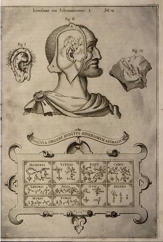 013- Musurgia Universalis sive ars magna consoni et dissoni Tome 1