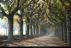 Herbst_Frankfurt_141108 (cmm62) Tags: licht nebel frankfurt herbst schatten perspektive mainufer platanen