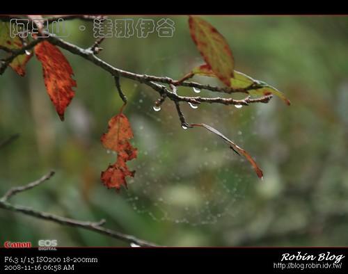 你拍攝的 20081116數位攝影_阿里山之旅040.jpg。