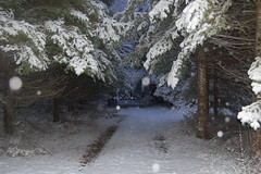 early winter Haliburton snow storm (smiditch357) Tags: winter storm winterscene