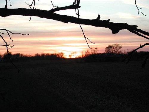 deer11-21-08sunset