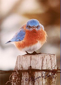 signedbluebirdpic.jpg by you.