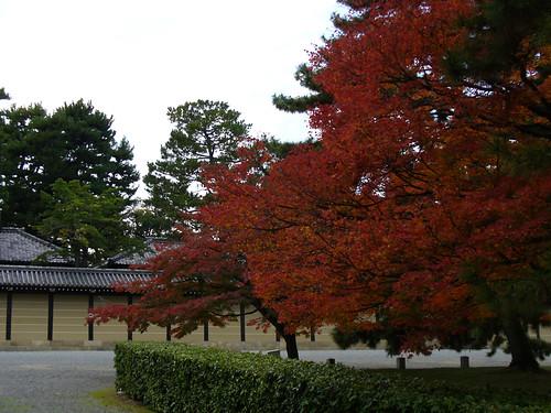 Paddock Café :: 京都御苑の紅葉