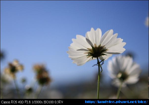 9711-新社花海:Date with Bee_067.jpg