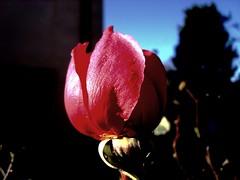 Rosa (Elanorya) Tags: rose rosa natura terra fiore aria millefiori