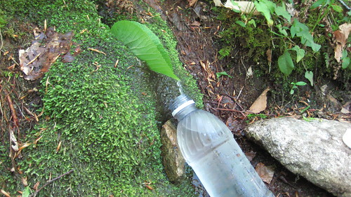 Spring Water Worth Bottling