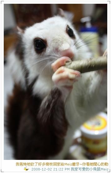 2008年11~12月份小飛鼠Meiz的生活照 (7)