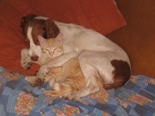 Perro y gato by Terrik