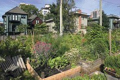 community garden, Mole Hill (by: Raef Grohne for Canadian Architect)