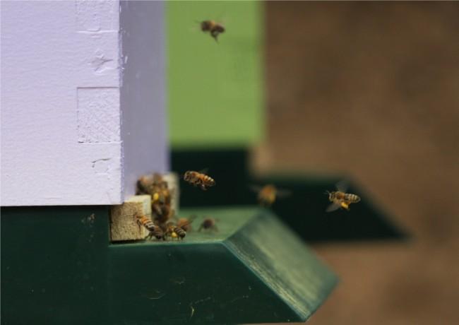 beekeeping 219 (650 x 460)