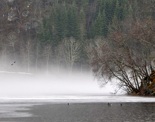 fog lake ice forest birds
