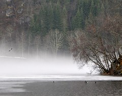 fog lake ice forest birds (ystenes) Tags: lake ice norway landscape norge norwegen fjord 1001nights landschaft norvege magiccity nordmre mygearandmepremium mygearandmebronze mygearandmesilver mygearandmegold mygearandmeplatinum mygearandmediamond kanestraumen kamsvaag musictomyeyeslevel1 flickrstruereflection1 rememberthatmomentlevel4 rememberthatmomentlevel1 rememberthatmomentlevel2 rememberthatmomentlevel3 rememberthatmomentlevel5