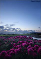 A View To Remember (Nicole R. Denny Photo & Design) Tags: ocean flowers sunset oregon landscape nicole view newport lovejoy mygearandme