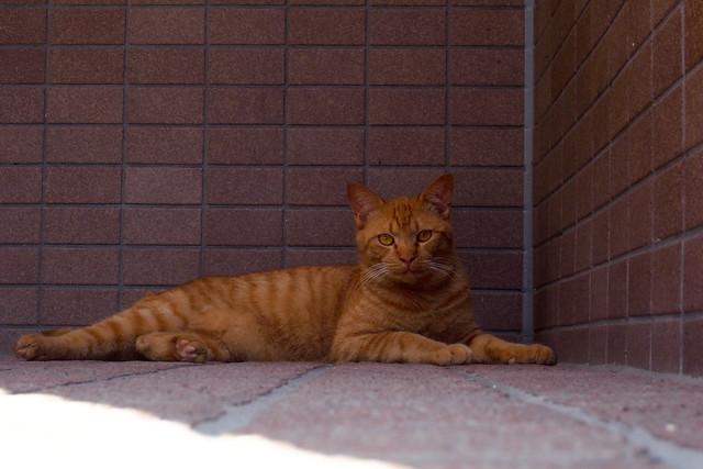 Today's Cat@2011-06-25