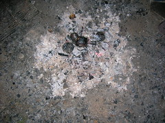 Ashes (Fufulula, thanks for 1,5 million visits) Tags: woods picnic ashes carmel haifa fabulous ilovemypic