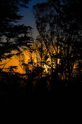 Sunset through Mt. Davidson Trees