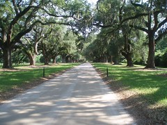 Road into Boone Hall