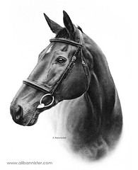 Sam (Ali Bannister) Tags: horse art drawing charcoal commission equestrian racehorse thoroughbred bridle