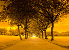 The Meadows in Edinburgh in gold (Semi-detached) Tags: trees orange golf gold scotland edinburgh university view meadows scottish course walkway vista avenue viewpoint ecosse bruntsfield marchmont aplusphoto