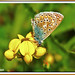 EL+BUENO+-+THE+GOOD+%28Mariposa+-+Butterfly+-+papallona%29