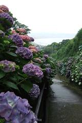 near gokurakuji in Kamakura