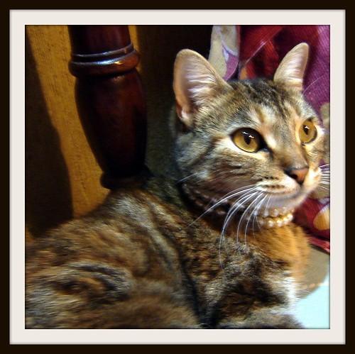 Perfil de Mia mi gata Reina