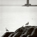Light House with gulls