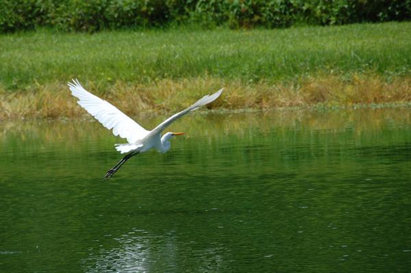 bird0042