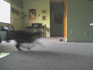 Anastacia running to greet me by ArthurLovesPlastic