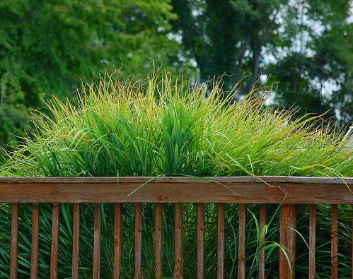 Grass growing around the pool fence in Boones Mill, Virginia by PhotoVirginia.com.