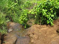 (dannebrog) Tags: hawaii kauai napalicoast kalalautrail
