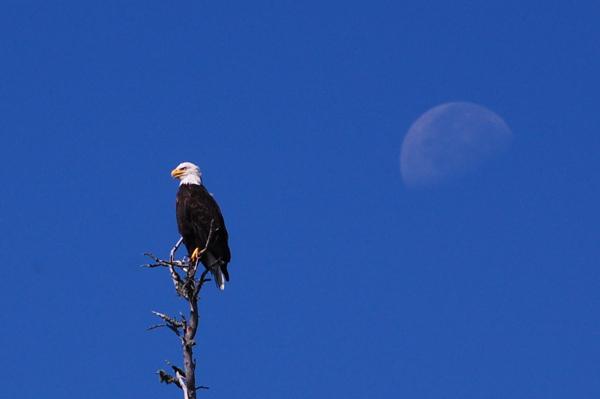 eagle_moon_0026