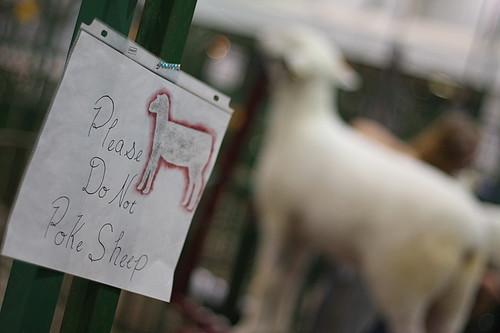 Please do not poke sheep.