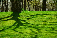 Green tree (jurek d.) Tags: shadow newyork tree green nature centralpark jurekd anawesomeshot colorphotoaward colourartaward