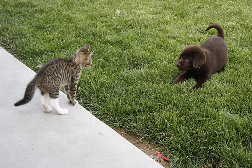 Kitty vs. Puppy