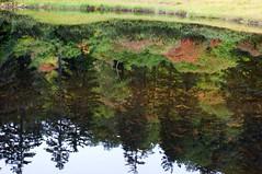 滝見沼に映る紅葉