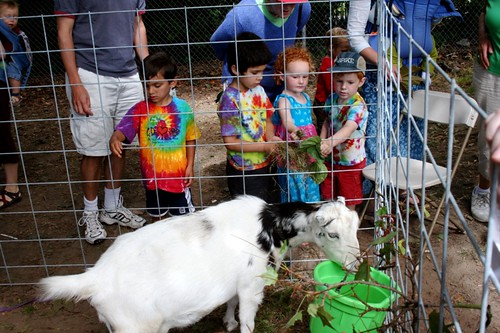 Hippie Kids Love Goats