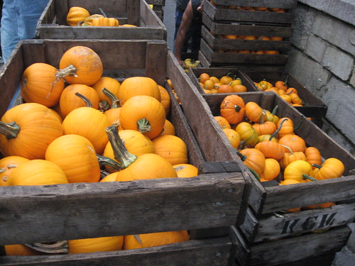 Pumpkins, Union Square