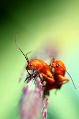 Piggyback ride!!!! (kees straver (will be back online soon friends)) Tags: macro green love piggybackride insects keesstraver