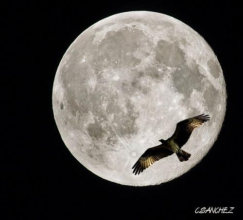 Night Flying (Flickr Explore)