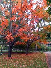 Autumn!!!!