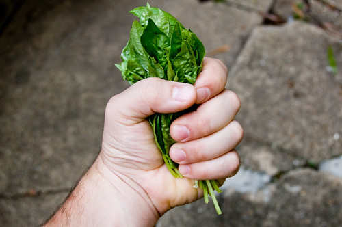 Fist Full of Basil