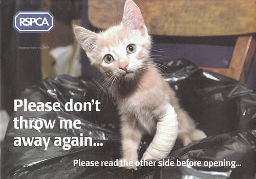 Shameless kitten