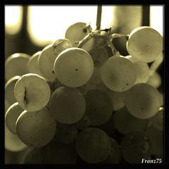 Vendemmia (franz75) Tags: italy nikon italia wine piemonte uva piedmont vino vendemmia gavi cortese winegrape d80 wowiekazowie ysplixblack cortesedigavi monterodondo