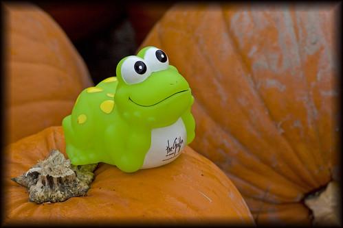 froggy pumpkin shoppin