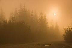 Isolation (Tyler Westcott) Tags: trees sunset orange silhouette washington nationalpark explore mountrainier ashford goldenhour potholes mtrainiernp nikond40