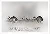 Sahara Convoy (Hamad Al-meer) Tags: brown black art sahara animal animals canon photography eos design photo shot desert image racing camel hd kuwait effect convoy hamad 100400mm edit q8 30d artphoto hmd لوحة حمد الكويت كويت صحراء جمل kuwaitphoto المير hamadhd hamadhdcom hamadcom wwwhamadhdcom hamadh
