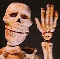 SkeletonWave990